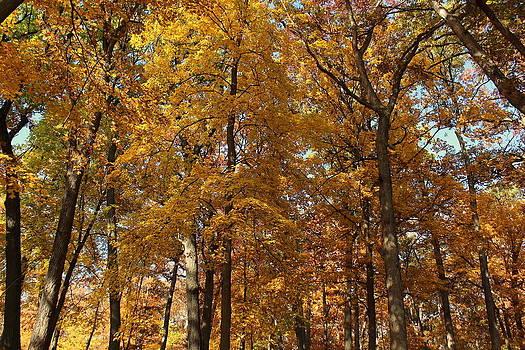 Rosanne Jordan - Golden Leaves