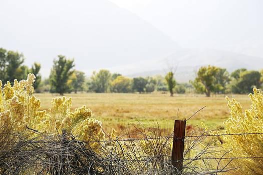 Golden Meadow by David Winge