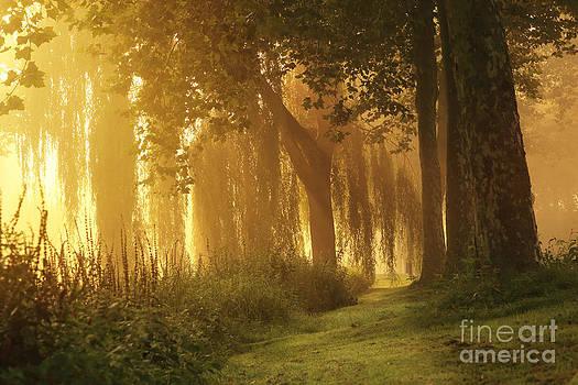 LHJB Photography - Golden morning light