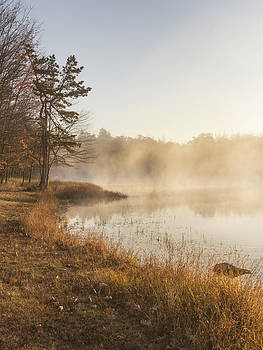 Golden Morning by Yelena Rozov