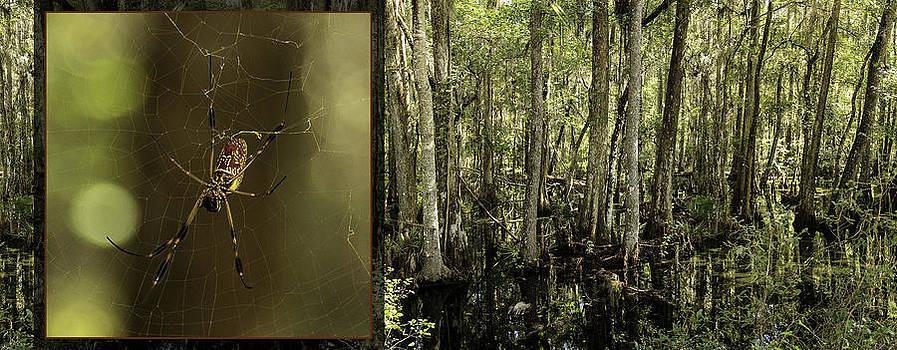 Lynn Palmer - Golden Orb Spider and Environs