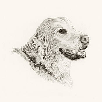 Golden Retriever by Jason Morgan