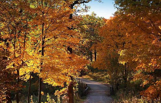 Rosanne Jordan - Golden Road in Autumn
