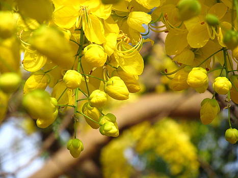 Golden Shower Tree by Paresh Bhanusali