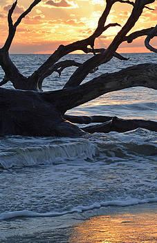 Golden Sunrise on Jekyll Island's Driftwood Beach 02 by Bruce Gourley