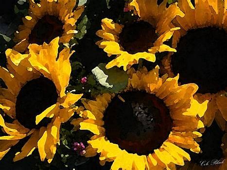Golden Sunshine by Cole Black