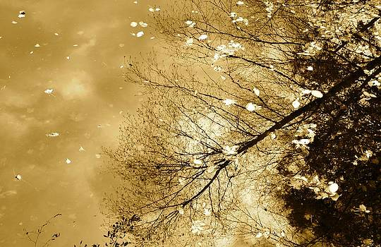 Corinne Rhode - Golden Tones