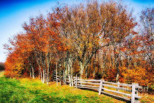 Dan Carmichael - Golden Treasure in the Blue Ridge
