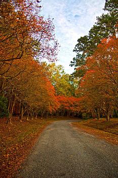 Regina  Williams  - Golden Tree Road