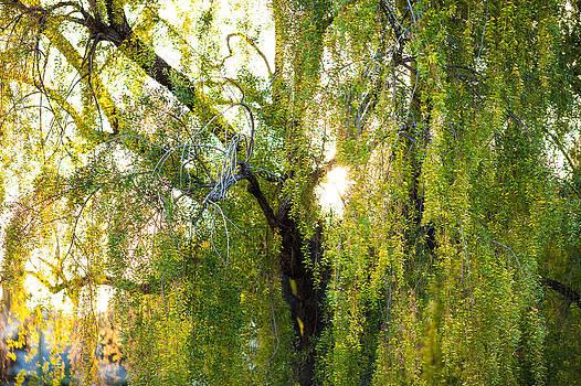 Golden treelight by Mike Lee