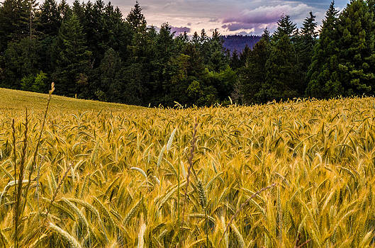 Golden Valley by Denise Darby