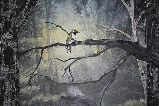 Golden WInged Warbler by Donna Jeanne  Carver