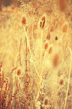 Jenny Rainbow - Golgen Shades of Wild Grass 1