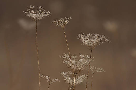Gone To Seed by Jim Nelson