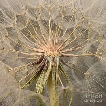 Gone to Seed by Noel Zia Lee