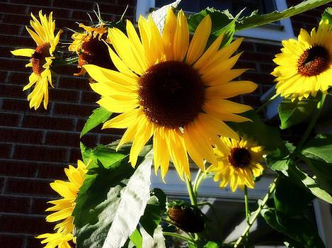 Good Morning Sunshine by Tanya Renee Herb