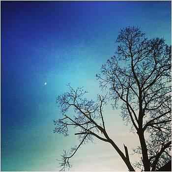 Goodnight Moon by Toni Martsoukos