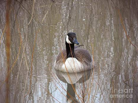 Goose on the Water by K L Roberts