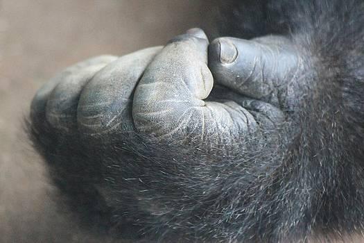 Paulette Thomas - Gorilla Hand