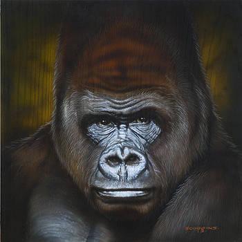 Gorilla by Tim  Scoggins