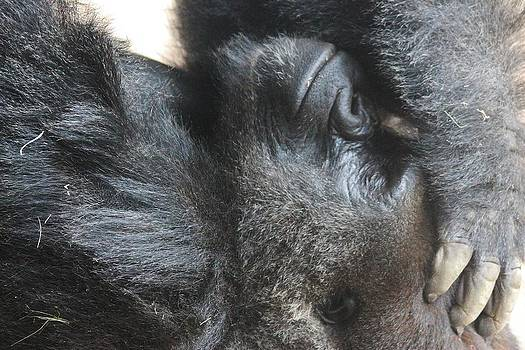 Paulette Thomas - Gorilla with a Headache