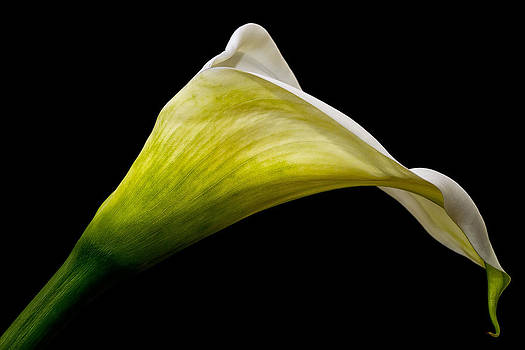 Graceful Curves by Kim Andelkovic