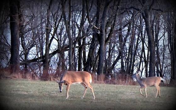 Graceful Deers by Jose Lopez