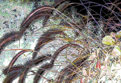 Graceful Grasslands by Ann Johndro-Collins