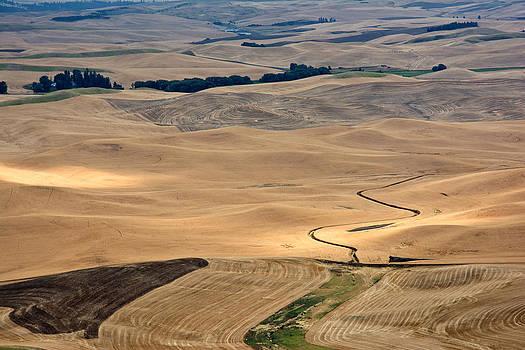 Randall Branham - Grain Fields Palouse