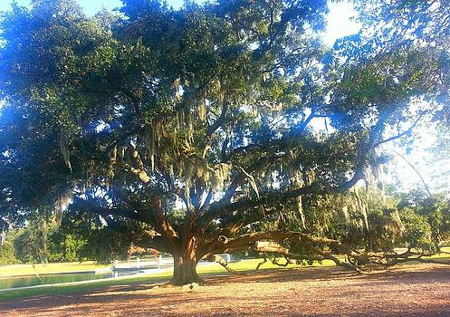 Grand Angelic Oak by Joetta Beauford