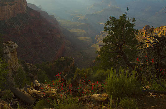 Tom Kelly - Grand Canyon View