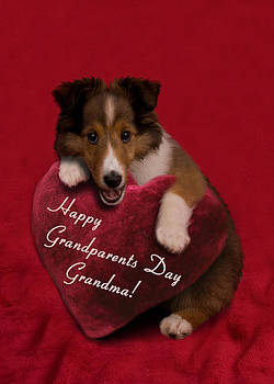 Jeanette K - Grandparents Day Grandma Sheltie