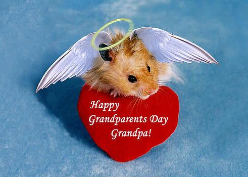 Jeanette K - Grandparents Day Grandpa Hamster