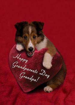 Jeanette K - Grandparents Day Grandpa Sheltie