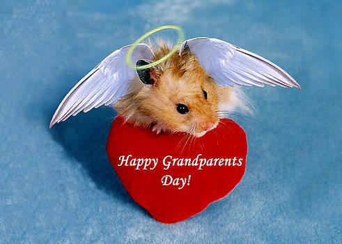 Jeanette K - Grandparents Day Hamster