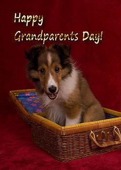 Jeanette K - Grandparents Day Sheltie