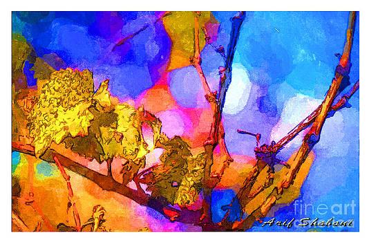 Grape Leaves In My Garden  Autumn  2009 by Arif Zenun Shabani