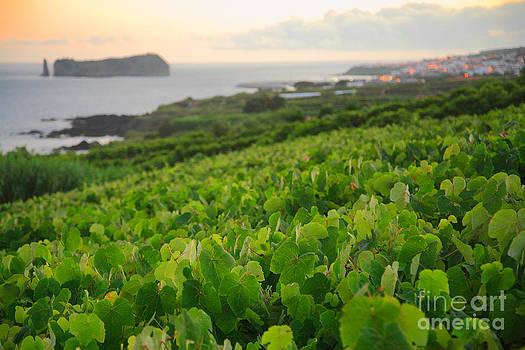 Gaspar Avila - Grapevines and islet