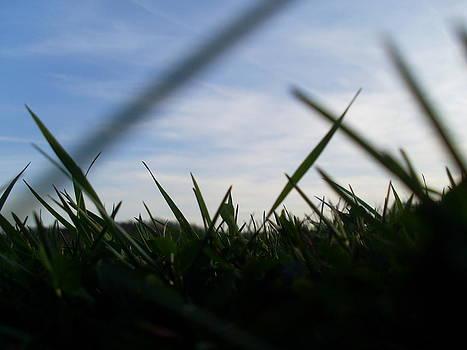 Grass-Eye-View by Kiara Reynolds