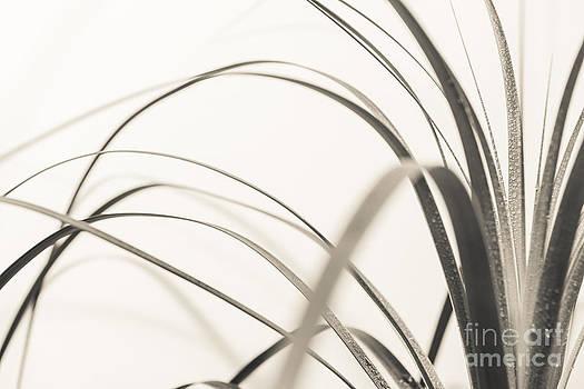 Hannes Cmarits - grass impression 3 - vintage