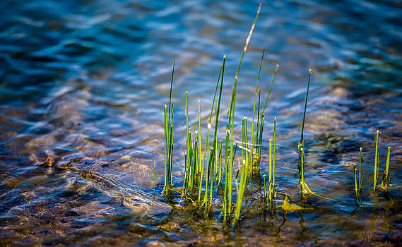 onyonet  photo studios - Grass in the Water