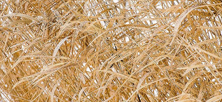 Grass In Winter by Debbie Patrizi