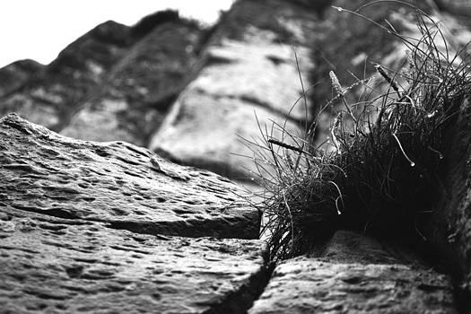 Grass on the Rocks by Peter McAuley