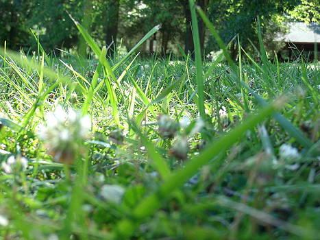 Grass by Terrilee Walton-Smith