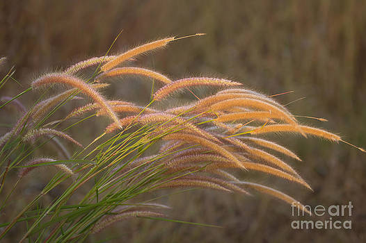 Grass together in a group by Tosporn Preede