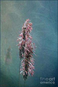 Liz  Alderdice - Grasses - Art by Nature