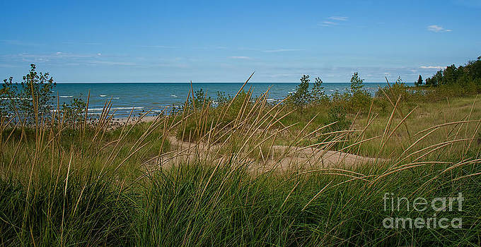 Barbara McMahon - Grasses of Lake Huron