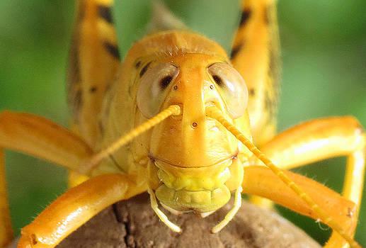 Grasshopper Grin by Walter Klockers