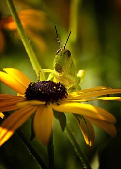 Grasshopper starting it's morning on a flower by Michael Huddleston