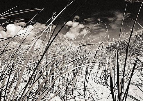 Arkady Kunysz - Grassy dunes